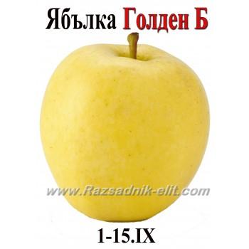 Ябълка Голден Би