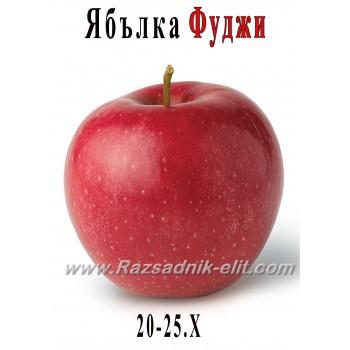 Ябълка Фуджи Кику