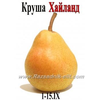 Круша Хайланд