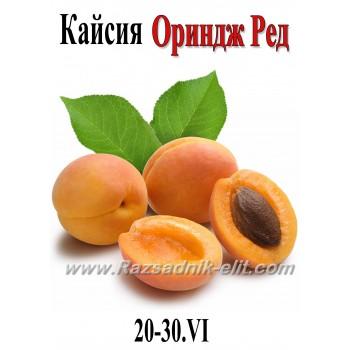 Кайсия Ориндж Ред