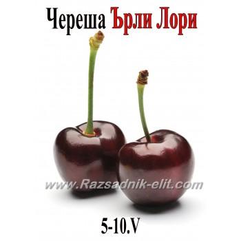 Череша Ърли Лори