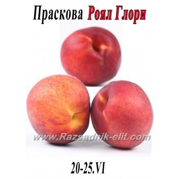 праскова Роял Глори